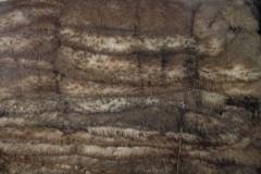 河北邢台辖区首次进口加拿大绵羊生皮